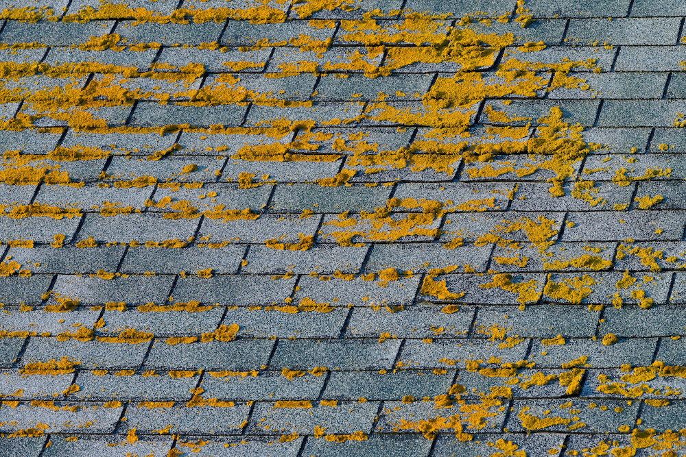 How to Safely Remove Algae From Your Roof