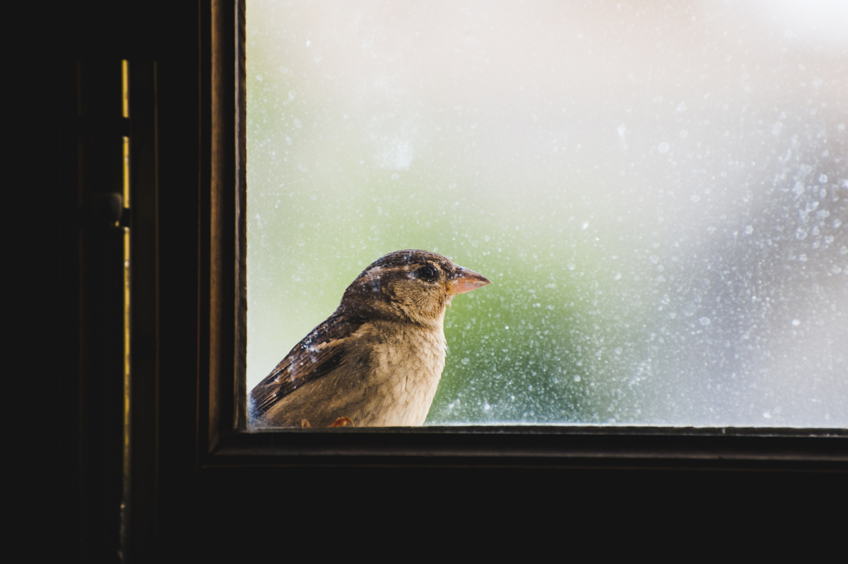 How to Prevent Birds from Colliding into your Windows